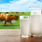 Organic Vs Processed Milk And Milk Products