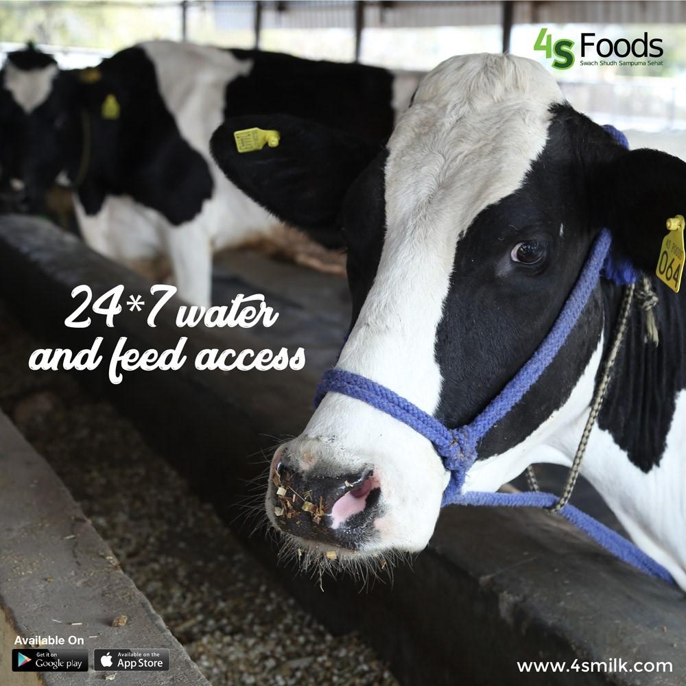 Organic-Cow-Milk
